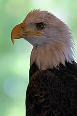 Eagle Close upLMP2B