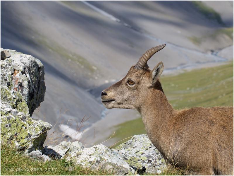 Randonnée au Col de la Vanoise 36637852991_07398afb94_o