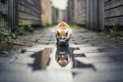 Double Trouble por Felicity  Berkleef