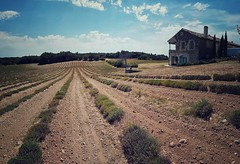 Lavande et Provence