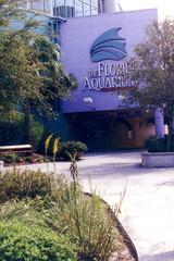 F178.Ank im Florida Aquarium