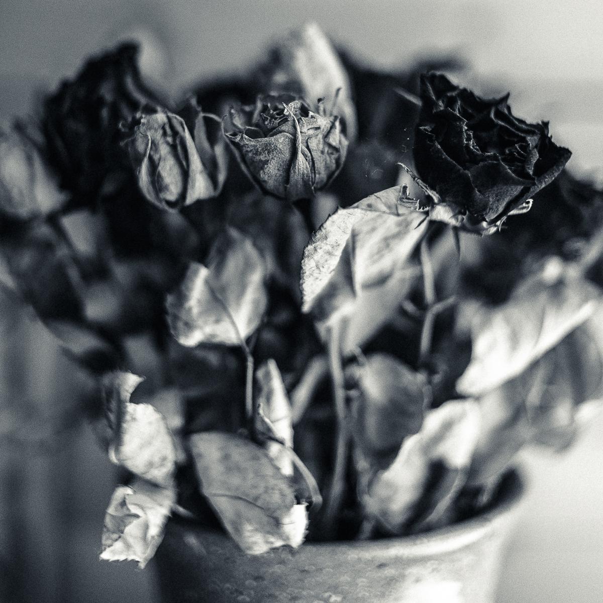 170903_deadflowers.bw5c_9342