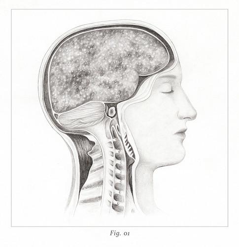 Fig. 01 - Lucis Salgado