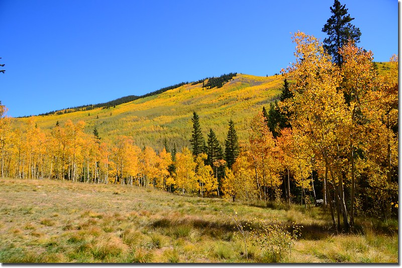 Fall colors, Kenosha Pass  (3)