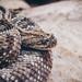 Snake Eyes by jordan_hillis