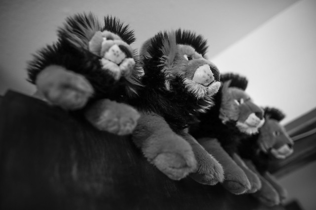 The 4 Lions, Canon EOS 5D MARK III, Canon EF 24mm f/1.4L II