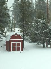 Premier Tall Barn Under Snow