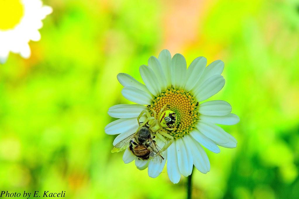 Natyra dhe insektet