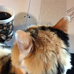 Not helping. #classprep, #coffee, #catsofinstagram, #virginiawoolf, #shakespearessister