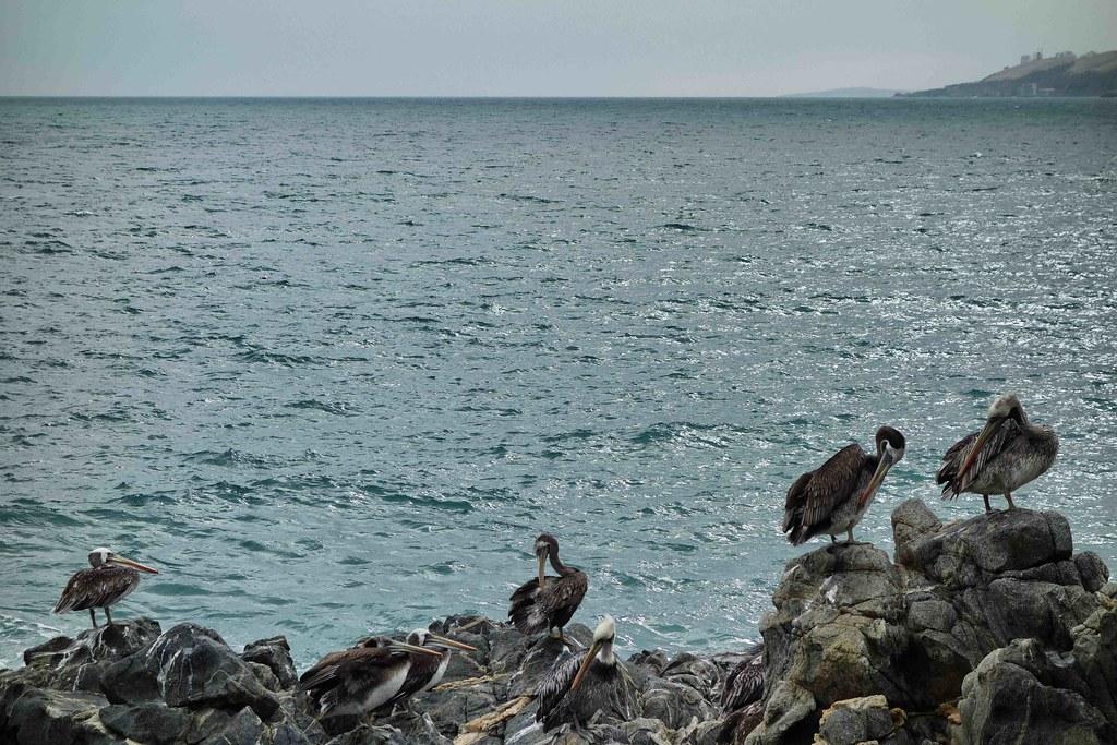 Valparaiso - Vina del Mar