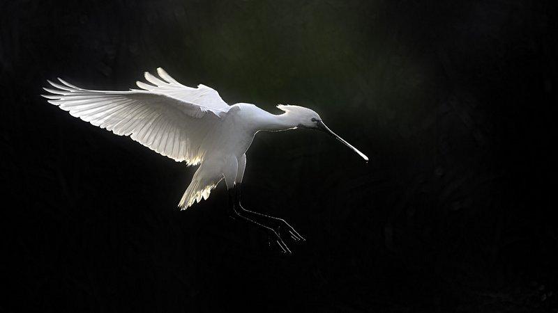 bien-choisir-un-affut-flottant-amar-guillen-photographe-12