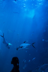 Yuna, Aquarium,Yeosu 2017.08
