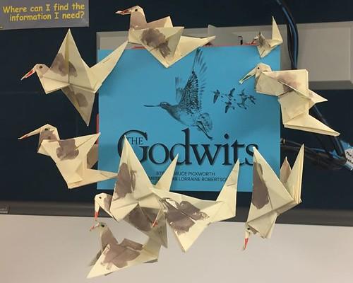 BW 56N Godwits