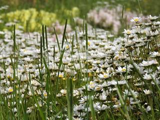 昭和の森 1 花々 08