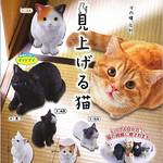 EPOCH 「往上瞧的貓咪」療癒轉蛋之作!見上げる猫