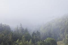 Brume en Lozère