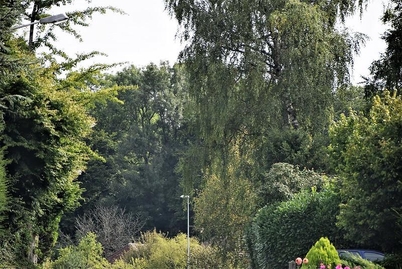 Trees 28.08 (2)