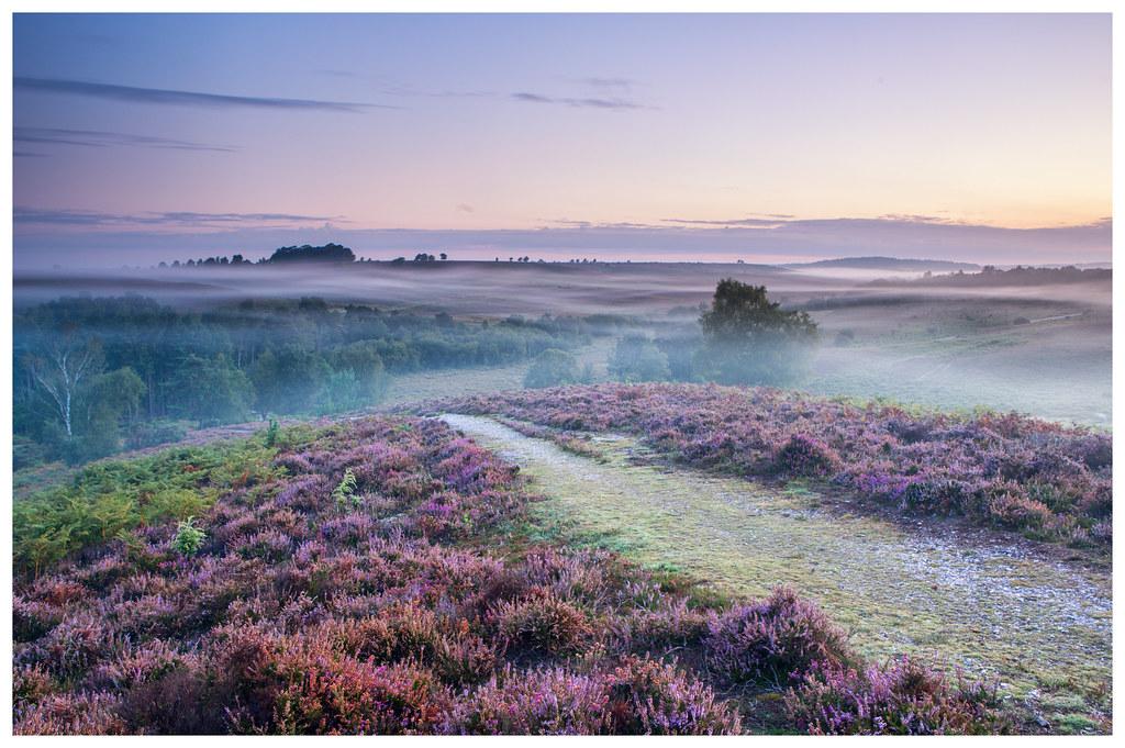 Rockford Misty Sunrise
