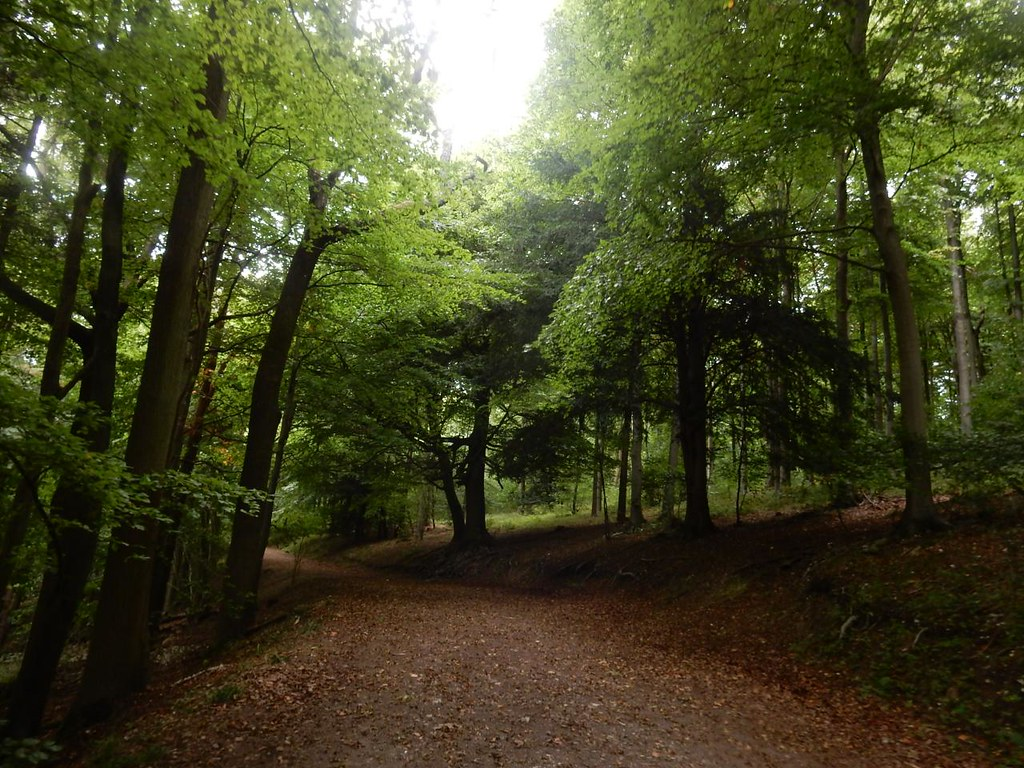 Forest path Wendover Circular via Swan Bottom