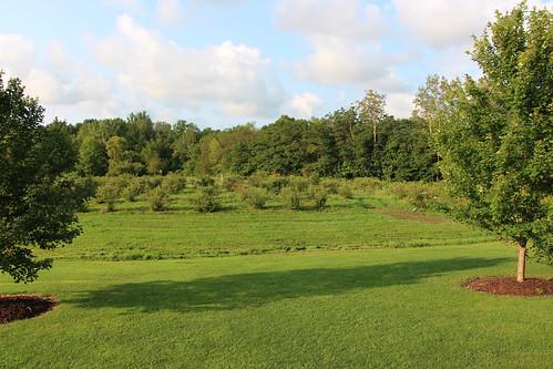 usa new york state blueberry farm nature