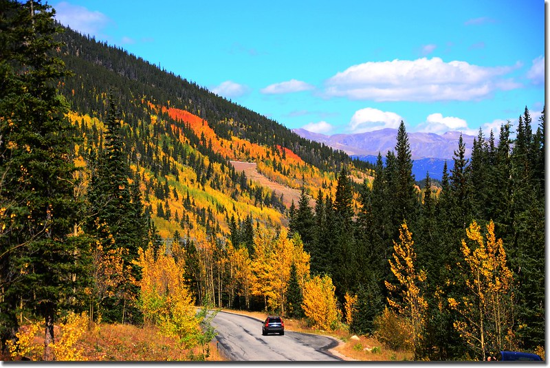 Fall colors, Guanella Pass, Colorado (23)