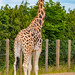 Twycross Zoo, Twycross, Leicestershire