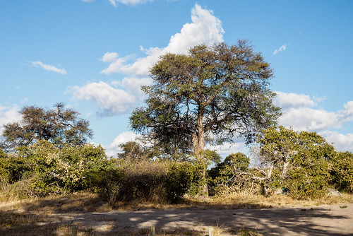 hiver chobe paysage réservenature botswana juillet nature northwestdistrict bw