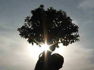 01 孤高の大樹
