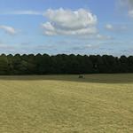 Making hay2