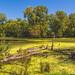 Marshland at Trempealeau National Wildlife Refuge, Wisconsin