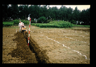 Trenching For Plant Of Mulberry = 植え付け用溝堀り