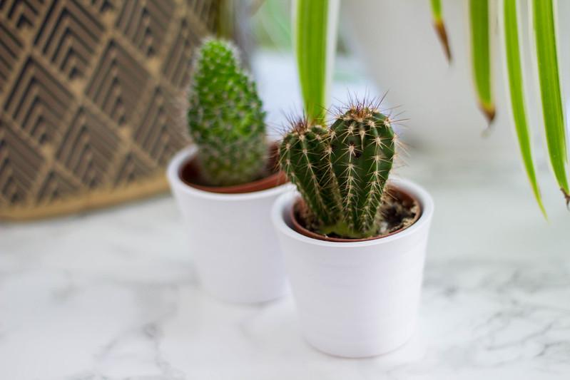 kaktukset ikea blogi 3