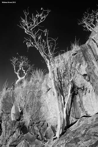 Petroglyph Cliffs