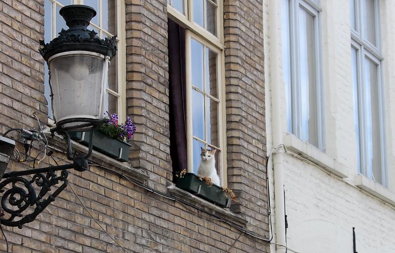 Cat in Brugge, Belgium