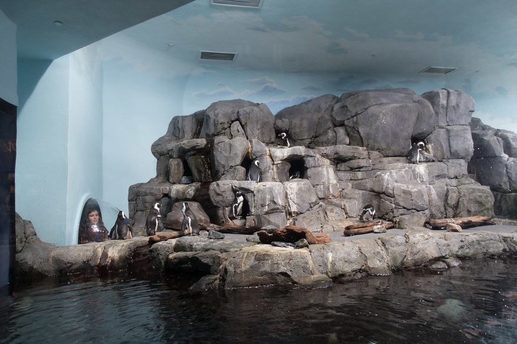 Penguin exhibit at Monterey Bay Aquarium