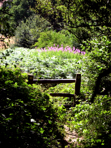 wadhurst woodland stile