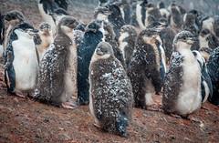 XXX Campaña Antártica