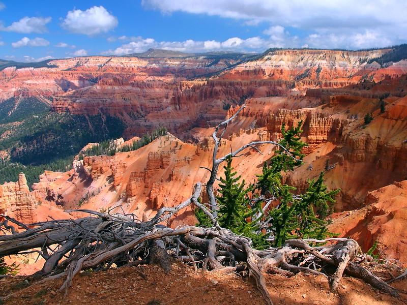 IMG_4825 Great Basin Bristlecone Pine at Cedar Breaks Amphitheater