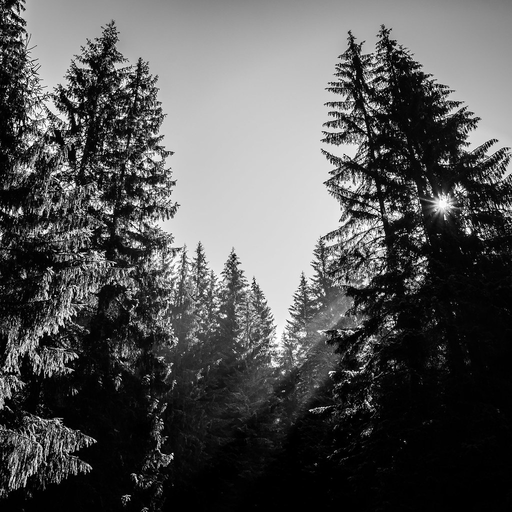 Through the trees - Romania - Black and white photography