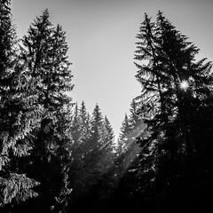 Through the trees - Romania - Black and white photography