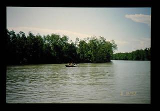 Mangrove In Kuala Selangor = マングローブ林(クアラ・セランゴール)
