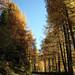 Alto Adige in autumn2016-15