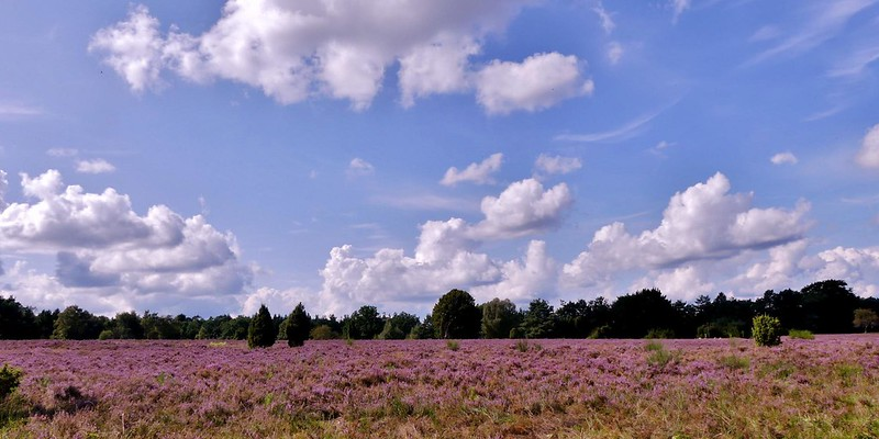sky-blue and purple-heather