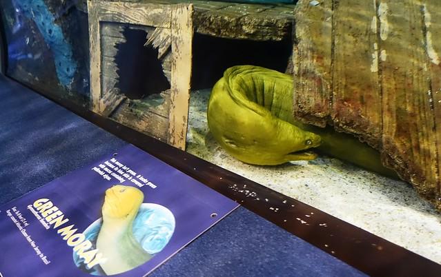 Resident of Ripley's Aquarium of the Smokies, Gatlinburg, Tennessee