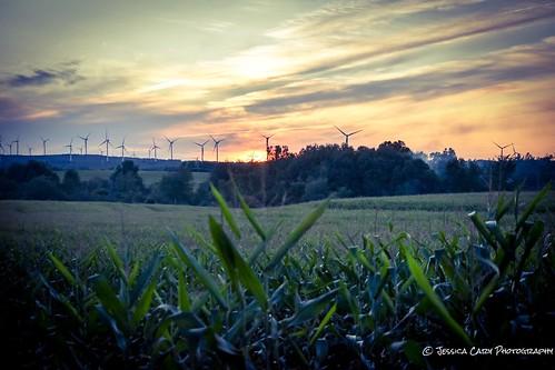confield cornfield sunset north northcountry amateurphotography amateurphotogrpahy farmlife rural windmills adirondacks