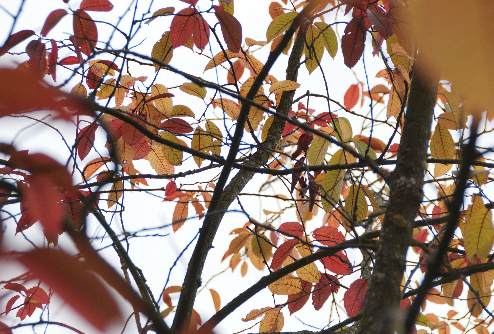 autumn colours 2
