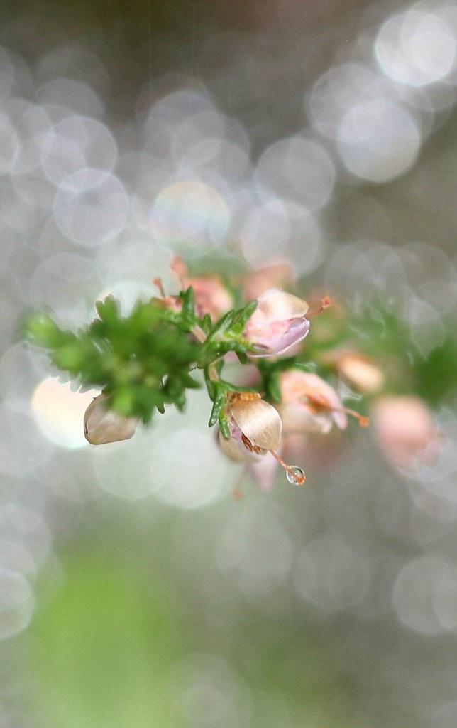 kleine #Blüten ganz #groß