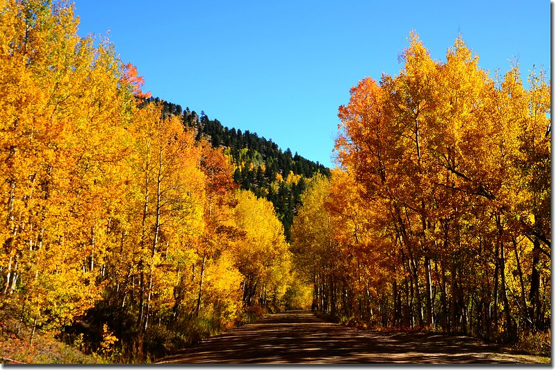 Fall colors, Mount Evans Scenic Byway, Colorado (23)