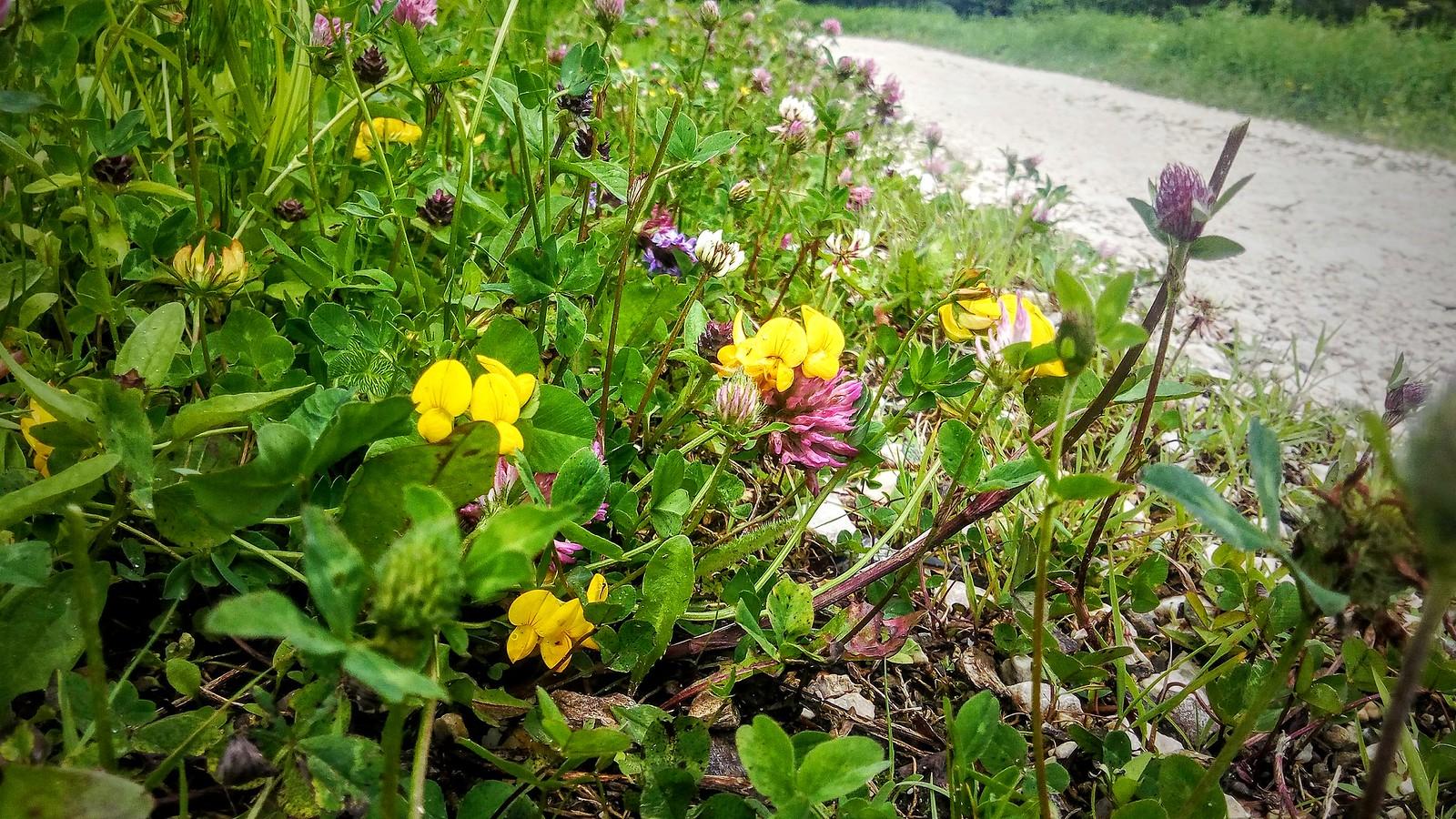 Floricele in Piatra Mare
