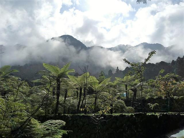 溪頭的山嵐 (7)